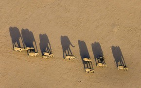 Picture shadow, Africa, elephants, Namibia, the herd, Region Damaraland