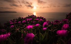Picture sea, the sun, clouds, landscape, sunset, flowers, nature, shore, coast, bright, the evening, horizon, pink, …