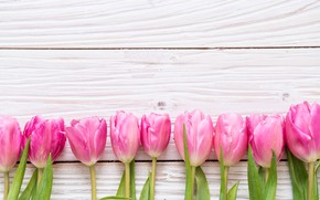 Picture flowers, tulips, pink, fresh, wood, pink, flowers, tulips