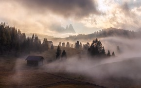 Picture forest, fog, Alps