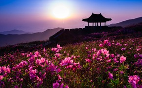 Picture landscape, sunset, flowers, mountains, nature, the evening, South Korea, pavilion, rhododendrons, Hwangmaesan