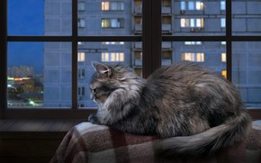 Wallpaper autumn, cat, cat, look, glass, the city, lights, comfort, house, heat, grey, stay, frame, Windows, ...
