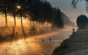 Picture light, trees, landscape, nature, fog, dawn, shore, morning, swans, silhouettes, pond