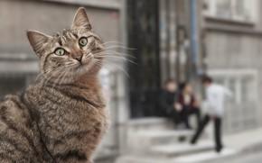 Picture cat, street, children, neighborhood
