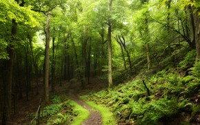 Picture road, forest, summer, trees, foliage