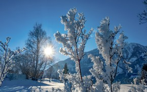 Picture winter, frost, the sun, snow, mountains, nature, twigs, blue sky