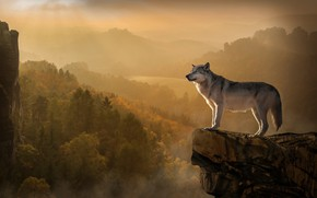 Wallpaper autumn, forest, trees, landscape, mountains, nature, fog, rock, grey, open, dawn, hills, stone, height, wolf, ...