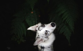 Picture look, leaves, nature, pose, the dark background, portrait, dog, white, fern, view, the view from …