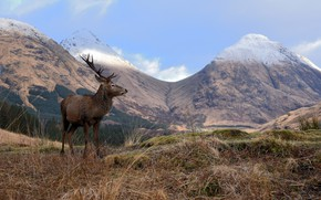 Picture grass, trees, landscape, mountains, nature, deer, valley, bokeh