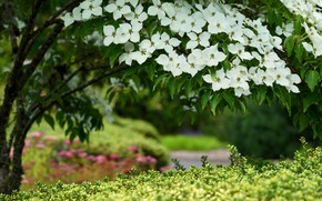 Picture flowers, branches, nature, Bush, spring, garden, white, flowering