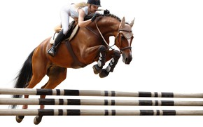Wallpaper jump, horse, rider, obstacle, horse riding