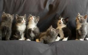 Picture kittens, kittens, Gert van den Bosch