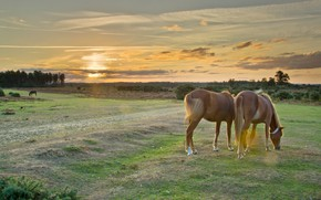 Picture field, summer, the sky, the sun, clouds, landscape, sunset, nature, two, horses, the evening, horse, …
