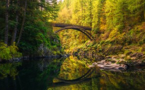 Picture autumn, forest, trees, branches, bridge, lake, pond, reflection, shore, view, ate, arch, pine, pond