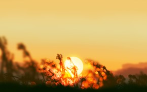 Picture grass, the sun, sunset, nature, by Gracile
