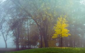 Picture autumn, forest, trees, branches, fog, Park, trunks, morning, lawn, tree, yellow foliage