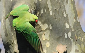Picture tree, parrot, trunk, bark