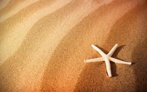 Picture sand, beach, starfish