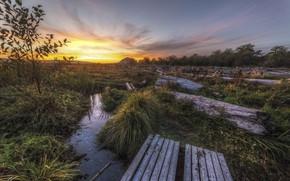 Picture landscape, nature, dawn, beauty, the bridge, nature