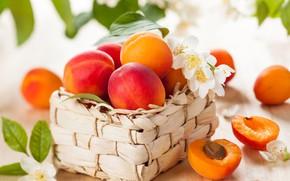 Picture flowers, fruit, basket, apricots, Jasmine