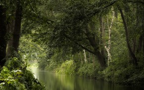 Picture forest, summer, river