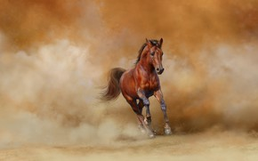 Picture background, horse, horse, art