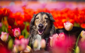 Picture summer, flowers, each, dog