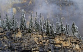 Picture snow, trees, mountains, fog, stones, open, rocks, height, Canada, Canada