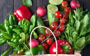Picture cucumber, pepper, vegetables, tomatoes, radishes, Basil, arugula