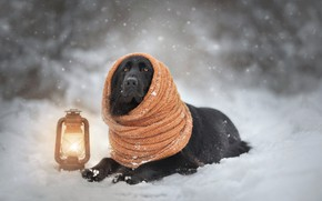 Picture lamp, dog, scarf