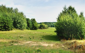 Picture field, summer, the sun, trees