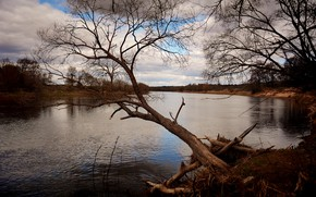 Picture clouds, river, tree, spring
