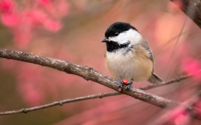 Picture autumn, branches, bird, foliage, red background, tit