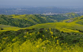 Picture greens, summer, flowers, mountains, the city, hills, view, field, spring, dal, yellow, CA, haze, USA, …