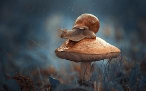 Wallpaper macro, mushroom, snail
