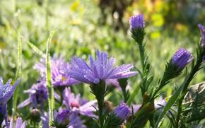 Picture autumn, macro, flowers, Rosa, lilac, Meduzanol ©