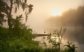 Picture summer, grass, landscape, nature, fog, lake, tree, dawn, bird, morning, Heron