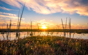 Picture grass, the sun, clouds, light, trees, sunset, lake, pond, shore, vegetation, swamp, dry, pond, naked