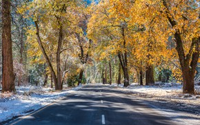 Picture winter, road, autumn, forest, the sun, snow, trees