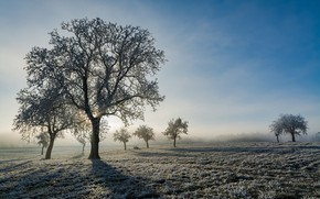 Picture winter, frost, field, nature, tree, morning, frost
