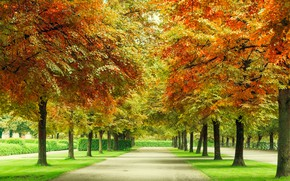 Picture autumn, forest, leaves, trees, Park, forest, alley, landscape, park, autumn, leaves, tree, fall