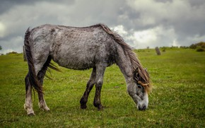 Picture clouds, horse, horse