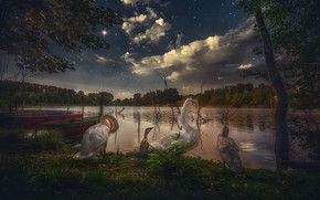 Picture the sky, trees, birds, night, lake, stars, swans, Chicks