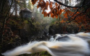 Picture autumn, United Kingdom, scotland, Hermitage Woods