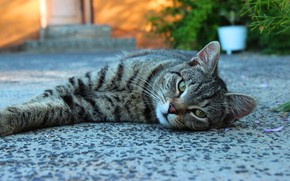 Picture cat, cat, look, face, pose, house, stay, yard, lies, bokeh, tabby