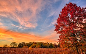 Picture field, autumn, tree, foliage, the crimson