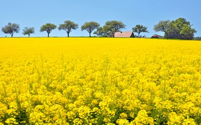 Picture field, summer, the sky, trees, flowers, blue, spring, yellow, meadow, houses, a lot, plantation, rape, …