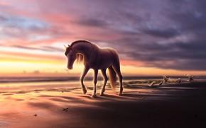 Picture horse, seagulls, gills, sea shore