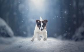 Picture winter, snow, dog, puppy, walk