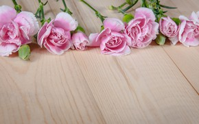 Picture flowers, pink, buds, wood, pink, flowers, clove